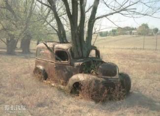 吞食汽车的饥饿之树 (29图)