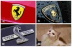 汽车市场变动物世界?7.58万起的欧拉白猫这样买划算! 【图】